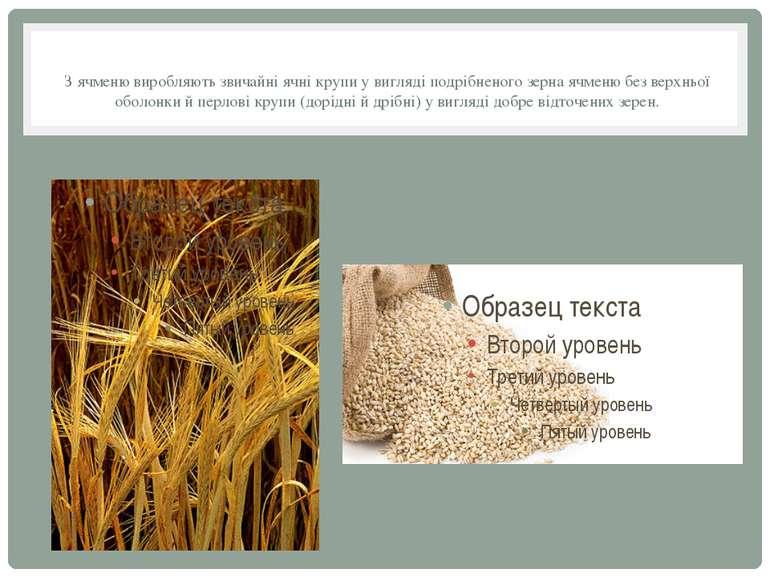 З ячменю виробляють звичайні ячні крупи у вигляді подрібненого зерна ячменю б...