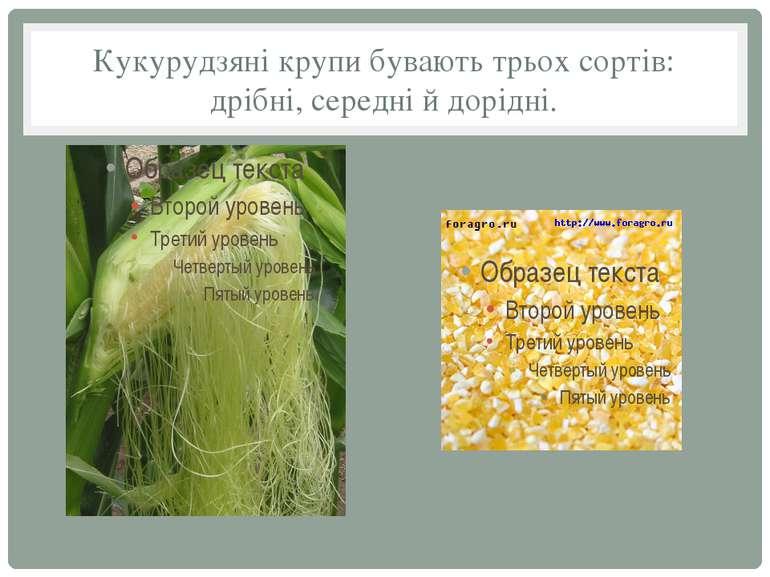 Кукурудзяні крупи бувають трьох сортів: дрібні, середні й дорідні.