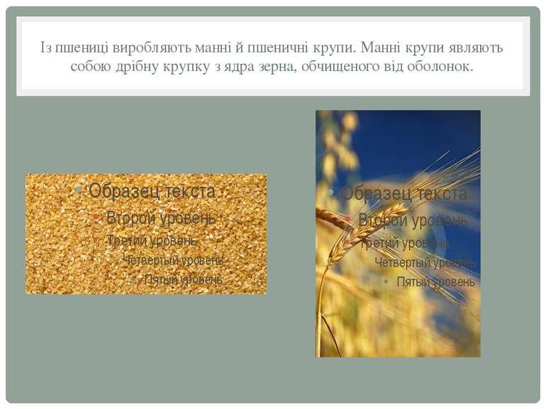 Із пшениці виробляють манні й пшеничні крупи. Манні крупи являють собою дрібн...