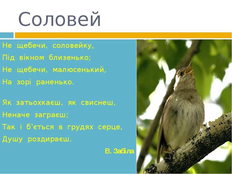 Соловей Не щебечи, соловейку,  Під вікном близенько;  Не щебечи, малю...