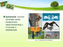 Аутекологія - екологія організмів, вивчає взаємозв'язки представників виду з ...