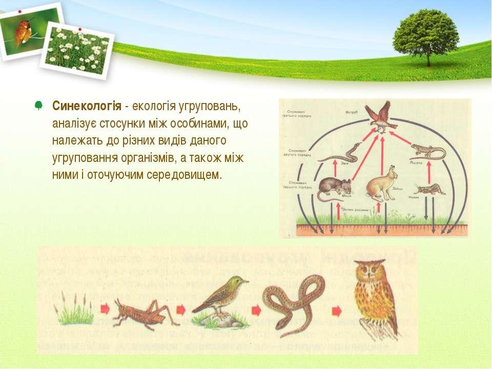 Синекологія - екологія угруповань, аналізує стосунки між особинами, що належа...