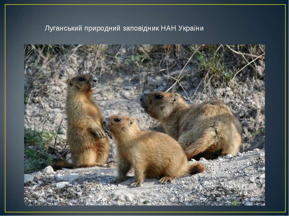 Луганський природний заповідник НАН України