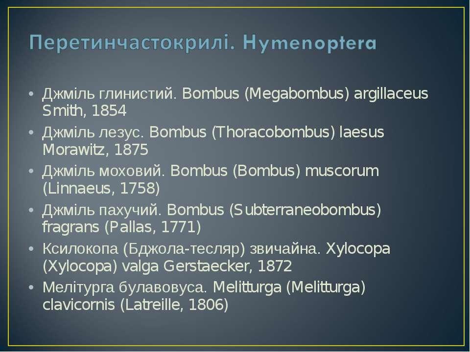 Джміль глинистий. Bombus (Megabombus) argillaceus Smith, 1854 Джміль лезус. B...
