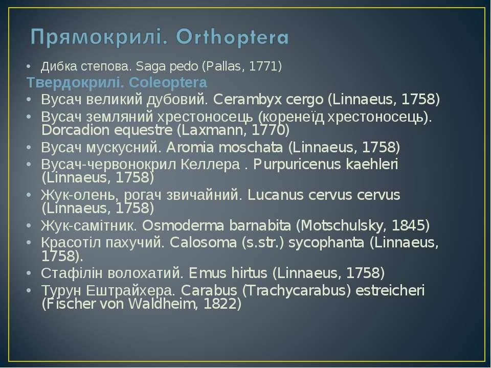 Дибка степова. Saga pedo (Pallas, 1771) Твердокрилі. Coleoptera Вусач великий...