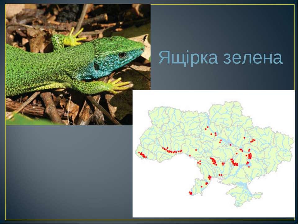 Ящірка зелена