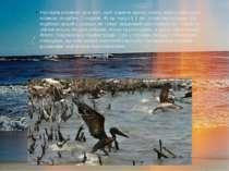Наслідки розливів: для того, щоб відмити одного птаха, вкриту нафтовою плівко...