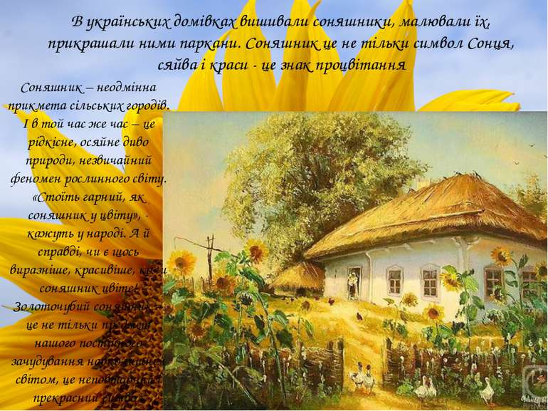 В українських домівках вишивали соняшники, малювали їх, прикрашали ними парка...