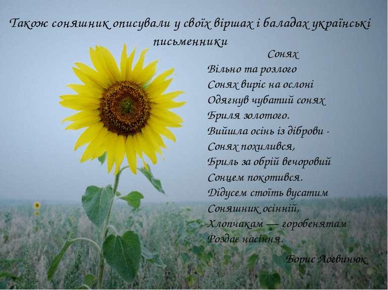 Також соняшник описували у своїх віршах і баладах українські письменники Соня...