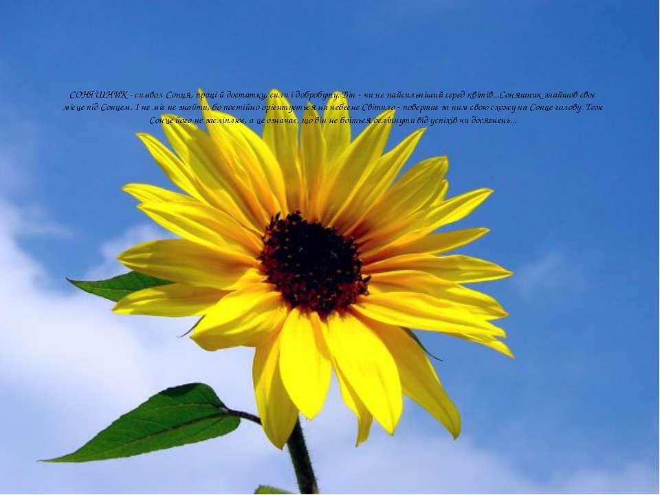 СОНЯШНИК - символ Сонця, праці й достатку, сили і добробуту. Він - чи не найс...