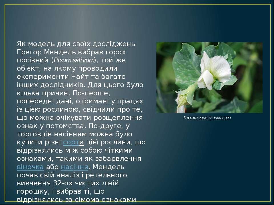 Як модель для своїх досліджень Грегор Мендель вибрав горох посівний (Pisum sa...