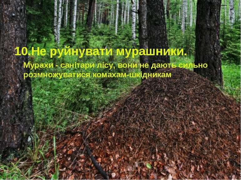 10.Не руйнувати мурашники. Мурахи - санітари лісу, вони не дають сильно розмн...