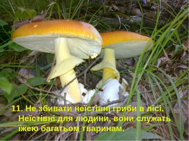 11. Не збивати неїстівні гриби в лісі. Неїстівні для людини, вони служать їже...