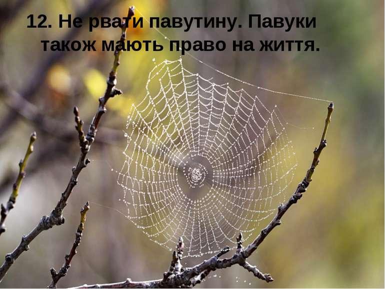 12. Не рвати павутину. Павуки також мають право на життя.