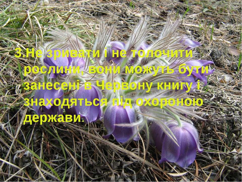 3.Не зривати і не толочити рослини, вони можуть бути занесені в Червону книгу...