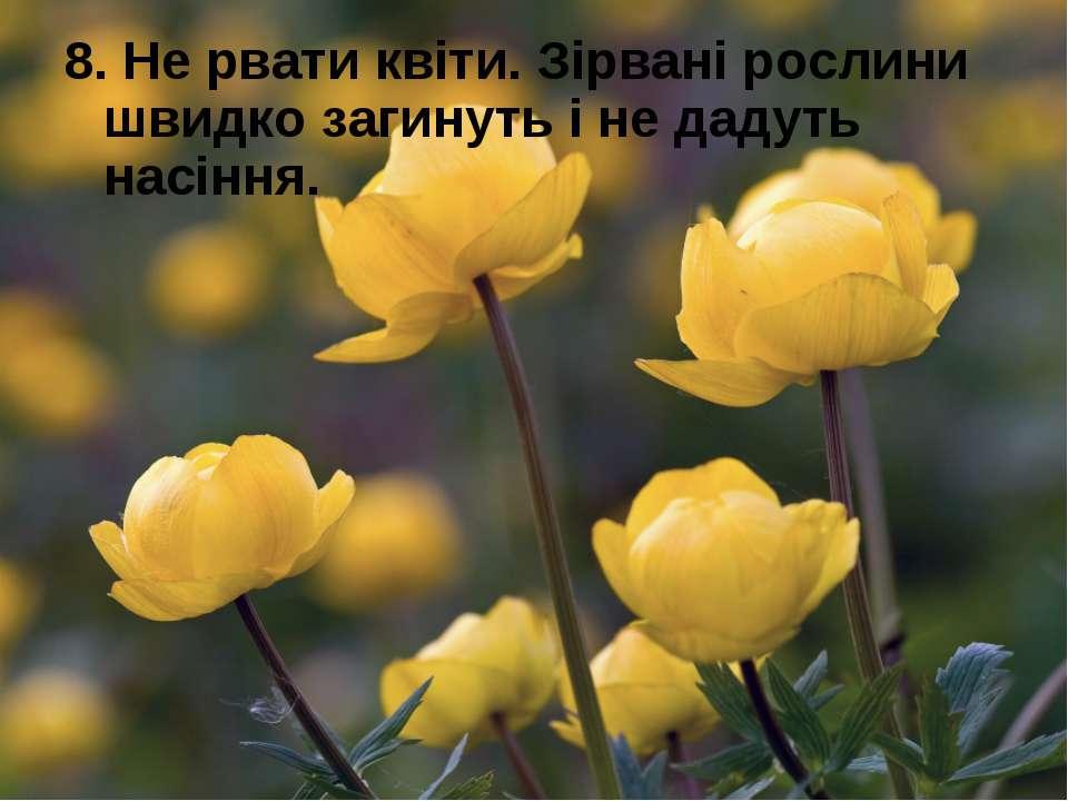 8. Не рвати квіти. Зірвані рослини швидко загинуть і не дадуть насіння.
