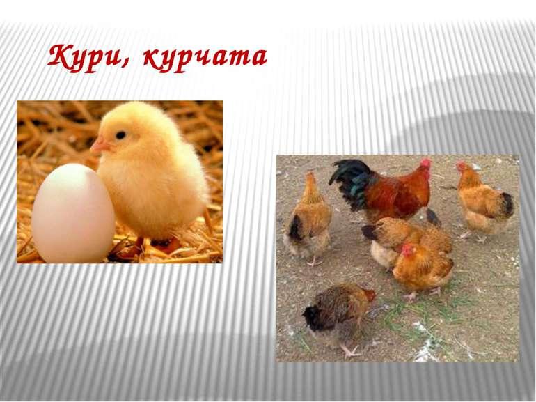 Кури, курчата