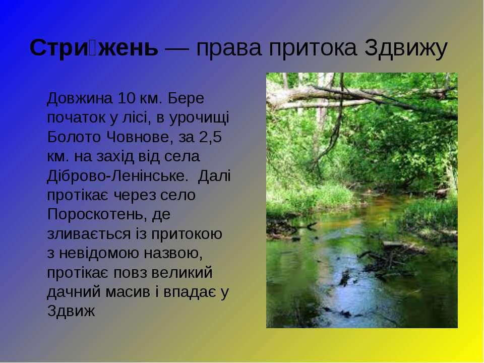 Стри жень—права притокаЗдвижу Довжина 10 км. Бере початок у лісі, в урочищ...