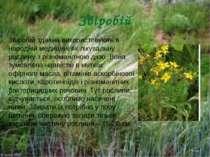 Звіробій Звiробiй здавна використовують в народнiй медицинi як лiкувальну рос...