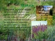 Шавлія У народній медицині шавлію застосовують у вигляді чаю для лікування хв...