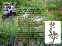 Медунка Застосовується при захворюванні легенів (легеневая трава), при запале...