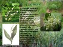 Конвалія У народній медицині препарати майської конвілії застосовуються при з...