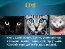 Очі Очі у котів великі, круглі, різноманітних кольорів: зелені, голубі, сірі....