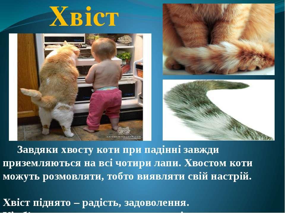 Хвіст Завдяки хвосту коти при падінні завжди приземляються на всі чотири лапи...