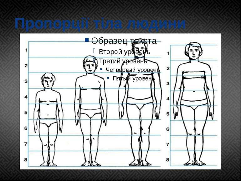 Пропорції тіла людини