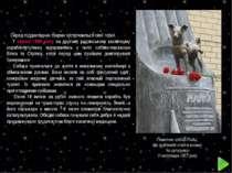 Памятник собаці Лайці, Що здійснила політ в космос на супутнику 3 листопада 1...