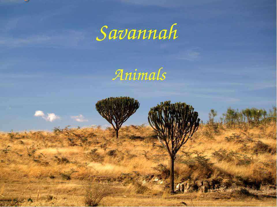 Savannah Animals