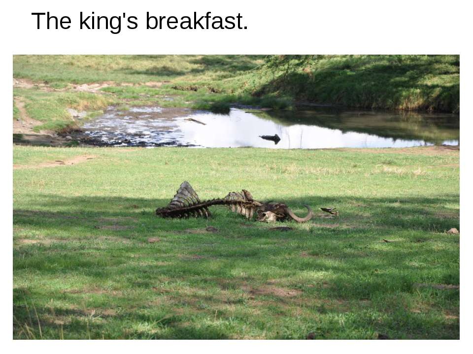 The king's breakfast.