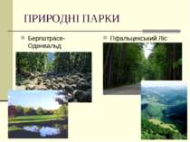 ПРИРОДНІ ПАРКИ Бергштрасе-Оденвальд Пфальцекський Ліс