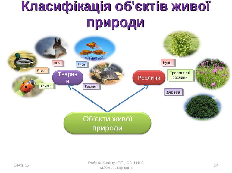 Класифікація об'єктів живої природи * Робота Кравчук Г.Т., СЗШ № 8 м.Хмельниц...
