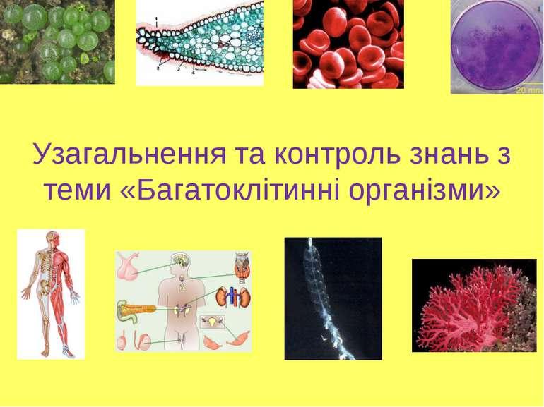 Узагальнення та контроль знань з теми «Багатоклітинні організми»