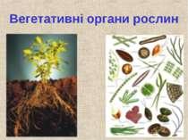 Вегетативні органи рослин