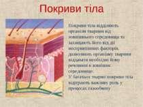 Покриви тіла Покриви тіла відділяють організм тварини від зовнішнього середов...