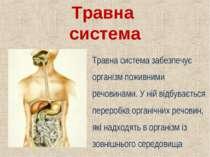 Травна система Травна система забезпечує організм поживними речовинами. У ній...