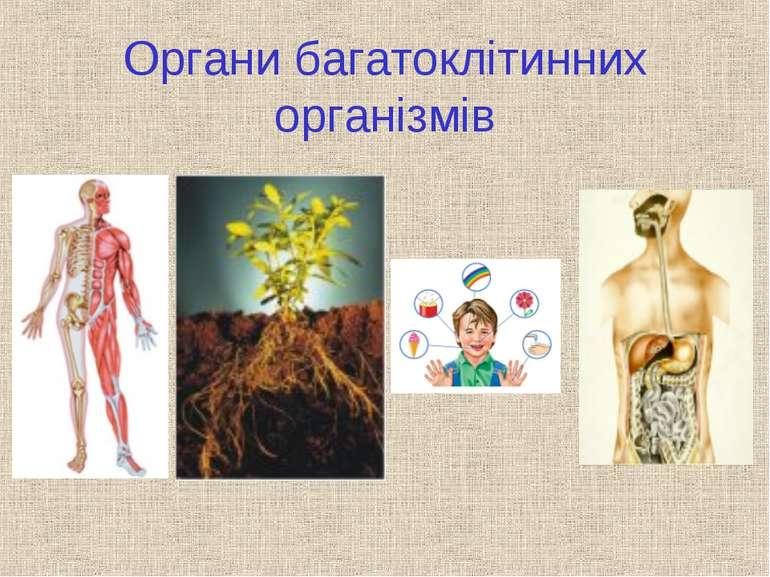 Органи багатоклітинних організмів