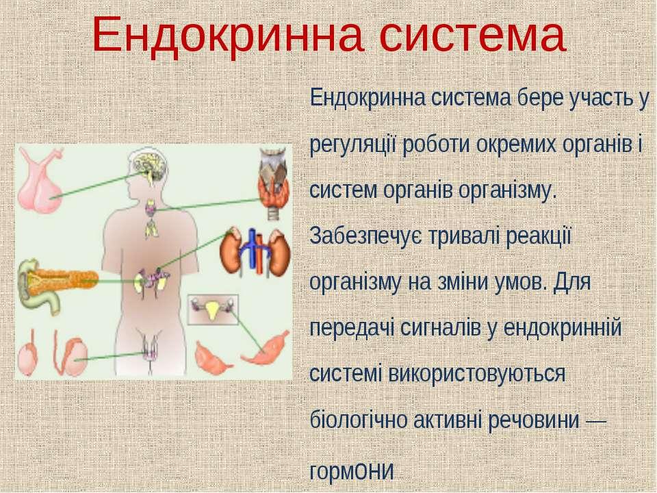 Ендокринна система Ендокринна система бере участь у регуляції роботи окремих ...