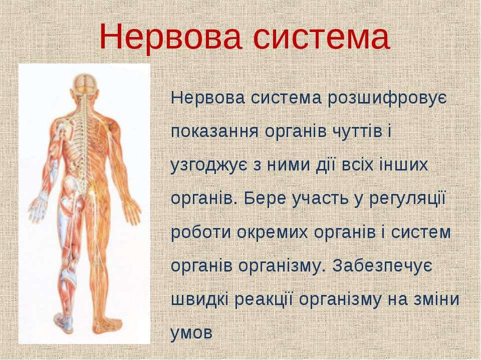 Нервова система Нервова система розшифровує показання органів чуттів і узгодж...