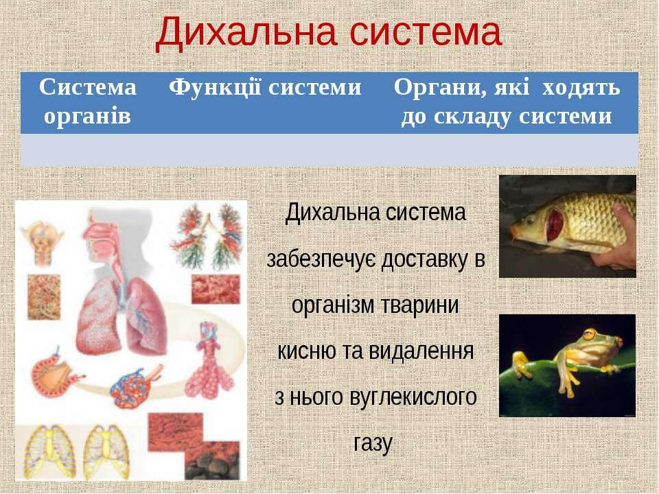 Дихальна система Дихальна система забезпечує доставку в організм тварини кисн...