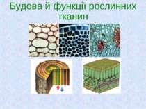 Будова й функції рослинних тканин