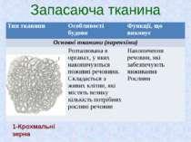 Запасаюча тканина 1-Крохмальні зерна Тип тканини Особливості будови Функції, ...