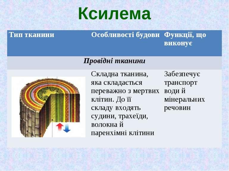 Ксилема Тип тканини Особливості будови Функції, що виконує Провідні тканини С...