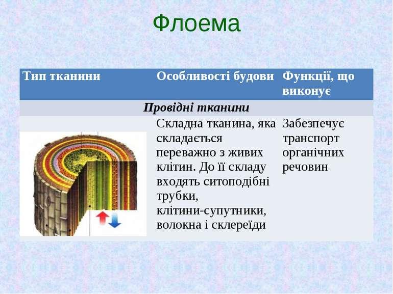 Флоема Тип тканини Особливості будови Функції, що виконує Провідні тканини Ск...