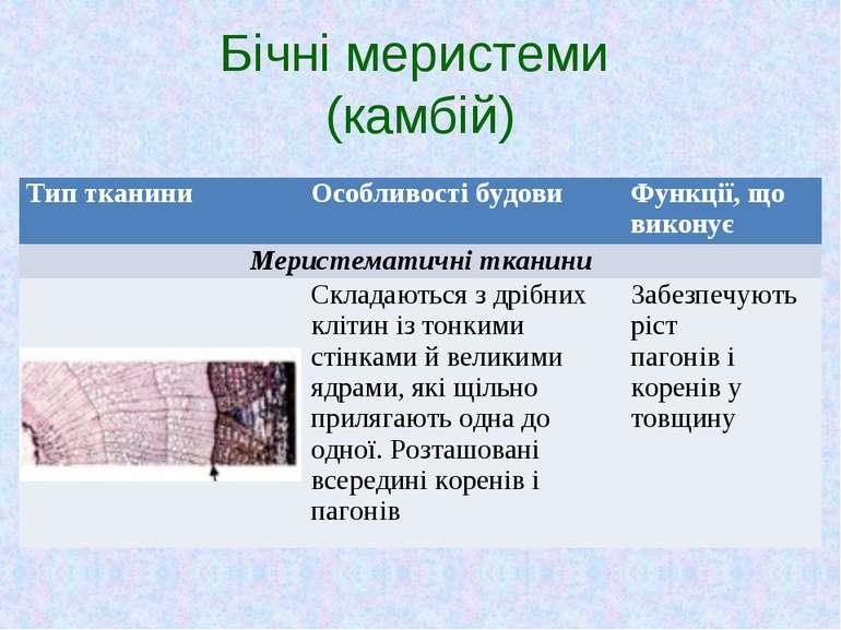 Бічні меристеми (камбій) Тип тканини Особливості будови Функції, що виконує М...