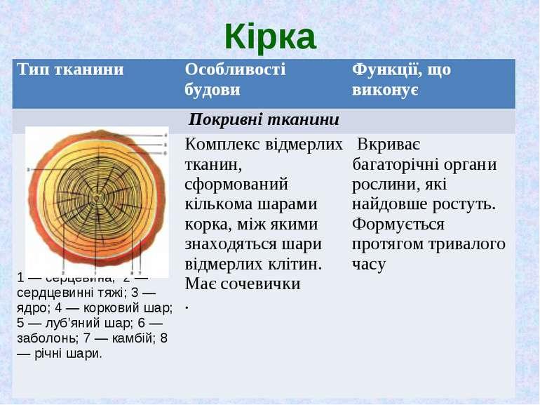 Кірка Тип тканини Особливості будови Функції, що виконує Покривні тканини 1 —...