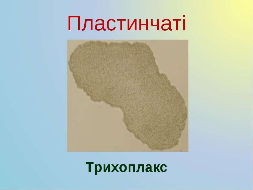 Пластинчаті Трихоплакс