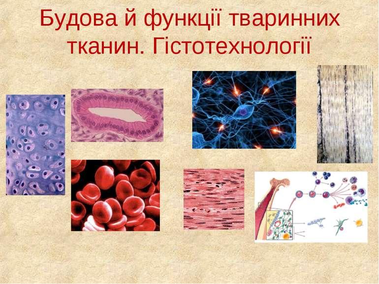 Будова й функції тваринних тканин. Гістотехнології